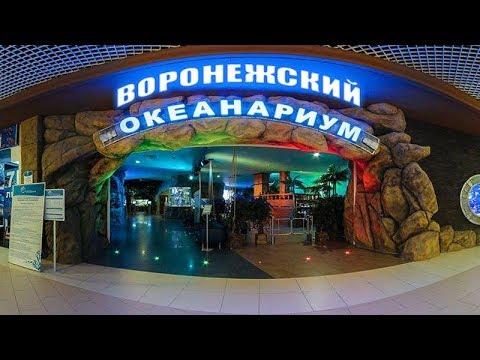 Воронежский океанариум. Сити парк Град