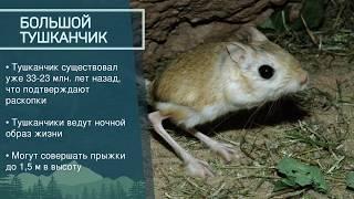 Животные под угрозой