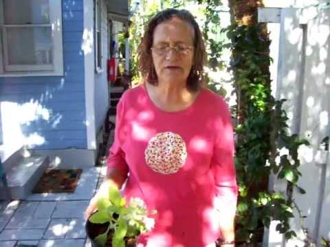 Borage and Salad Burnett Jeannie Fernsworth.mov