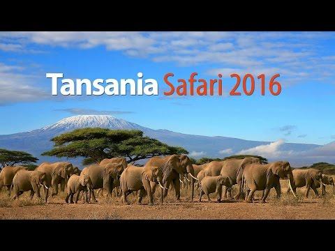 Tansania Safari 2016