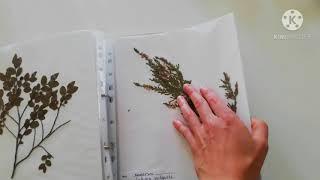 Kasvio - lyhyet ohjeet perinteisen kasvion tekoon