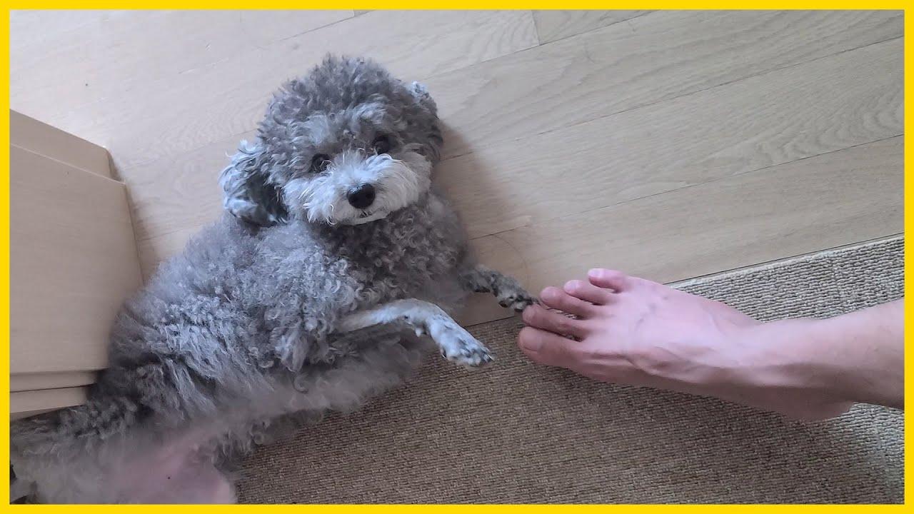 강아지 발 밟는 컨텐츠 따라했는데 이런 반응은 처음이다(변태냐)
