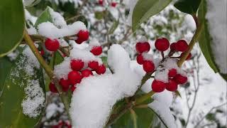눈 쌓인 천리포수목원