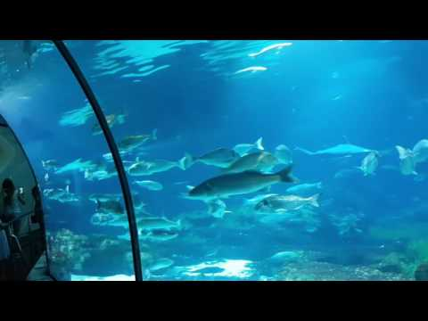 Beautiful Aquarium Barcelona