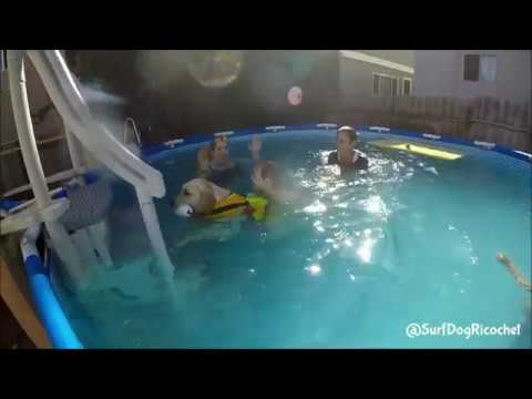 Boy cries with fear of pool until dog changes everything!