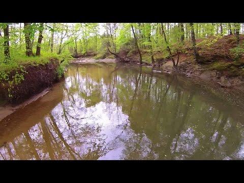 Low Flight Over the Creek in Northeast Park