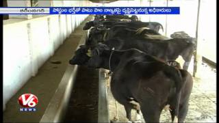 T government plans to implement pilot project for Dairy farming in Karimnagar