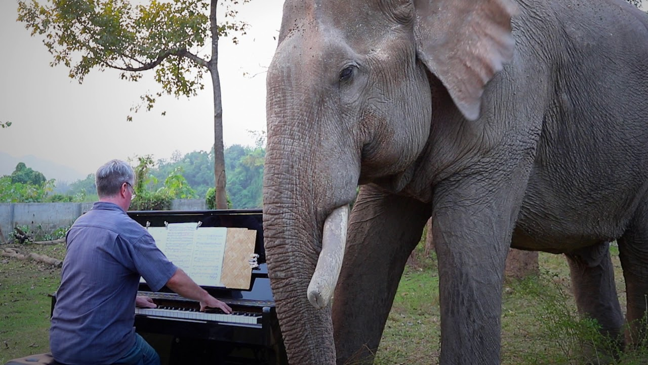 Beethoven Emperor On Piano For Old Bull Elephant Youtube