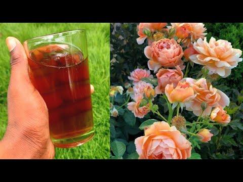 गुलाब के पौधे से ज्यादा फूल पाने का सीक्रेट जो आपको किसी ने भी नहीं बताया होगा / liquid fertilizer