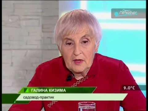 Скачать фильмы Огород без хлопот - ТОРРЕНТИНО - торрент
