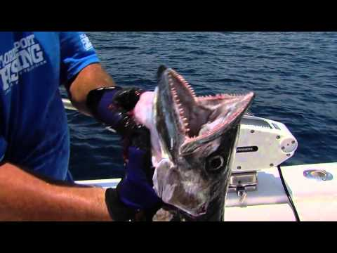 Shark Chum Bunker Chum Menhaden Oil at Ocean State Tackle 5am - 9pm Daily