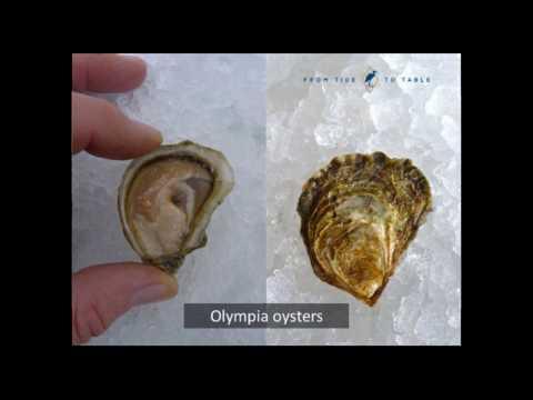 Oyster Symposium 2016 - Innovative Ideas From Taylor Shellfish Farms