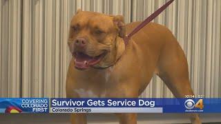 Colorado Veteran Receives Service Dog After Brutal Attack