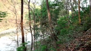 Inside the jangal Jim Corbett tour ram ganga river