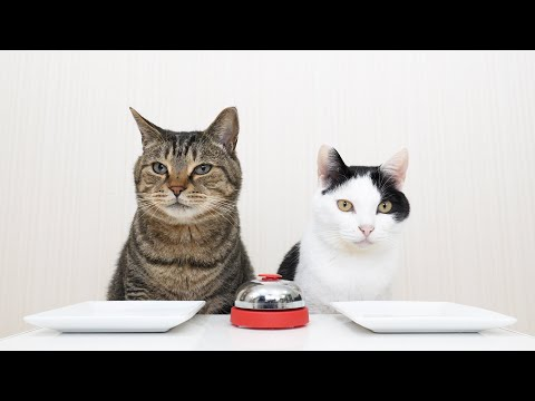 Cats and Bell