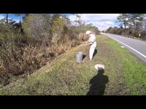 Releasing Eastern Diamondback Rattlesnake