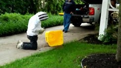Honeybee Removal Pest Bee Removal Hinsdale, Il.