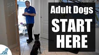 Adiestramiento de perros adultos: ¡3 habilidades importantes para enseñar PRIMERO!