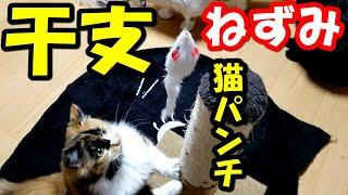 こんばんは!昨日の・・つづきです。 遊び上手のみかんネズミの玩具に連パンチ! いつもヤンチャなみかん(^^♪が話題の中心になる 5匹の保護猫...