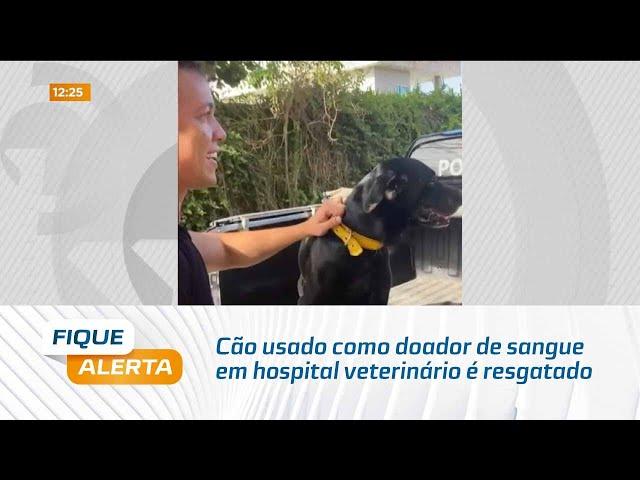 Cão usado como doador de sangue em hospital veterinário é resgatado pela polícia