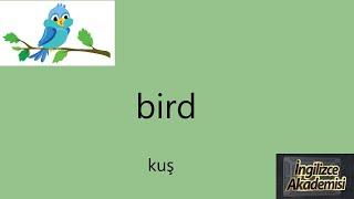 İngilizce Hayvan İsimleri, Okunuşu, Görsel Hafıza