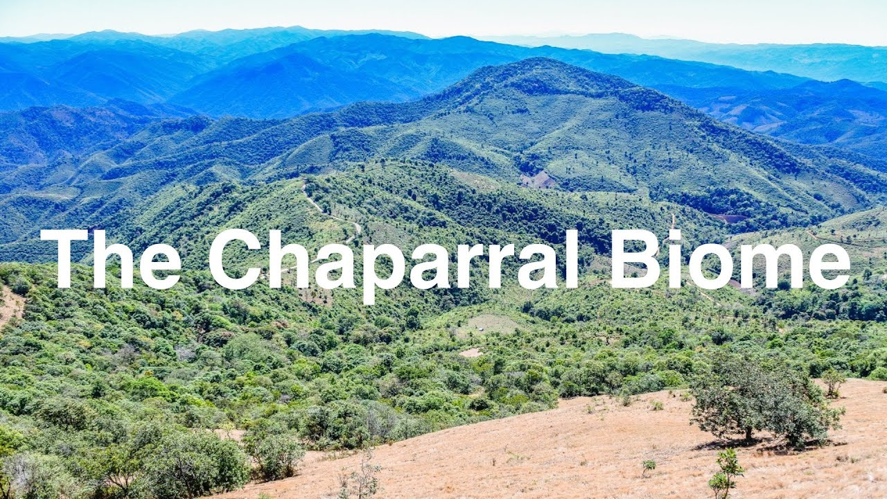 chaparral biome Keeping prey species in check is helpful to the survival of a significant number of  organisms, including plants, fish, and amphibians one of the most remarkable.
