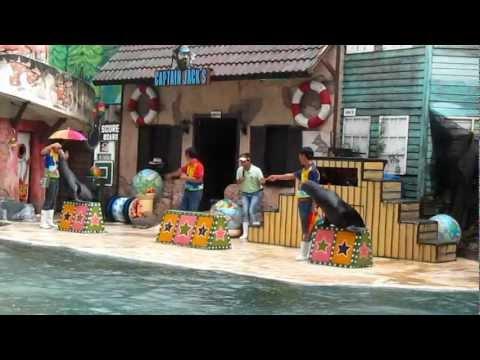 Xiếc Sư tử biển - SeaLion Show - Safari Word - ThaiLand