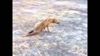 Download Video Աաաամենաալարկոտ շունը աշխարհում MP3 3GP MP4