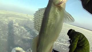 Моя первая зимняя рыбалка на судака. Калининград. Залив.