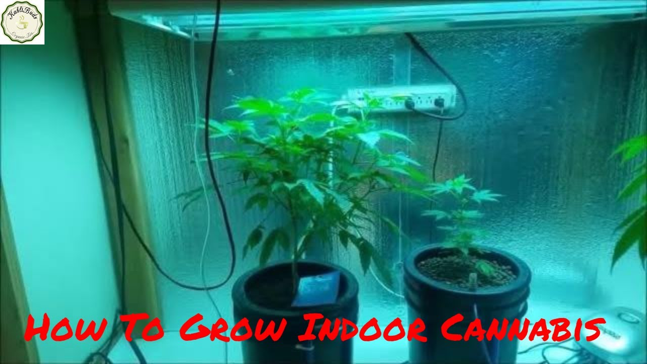 Best Coco Coir Hydroponics Nutrients for Weed - How To Grow Indoor Cannabis  mediums Coco Hydro Soil