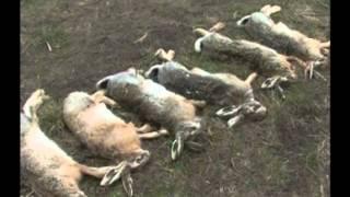 2013 04 18 2 bulgarii din banat tva iepuri