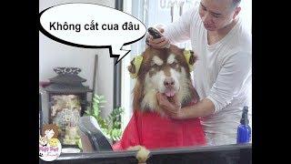 Mật lần đầu thử vào Salon cắt tóc - cười chết mất - Mật Pet Family