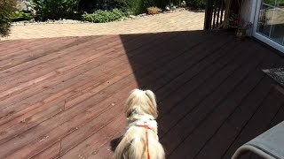 Looking At Our Pond And A Walk With Shih Tzu Dog Lacey