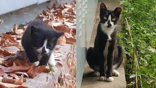 길고양이의 성장 (1년의 기록 - 압축ver.)