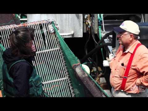 Evaluating Bycatch In The Washington Shrimp Trawl Fishery