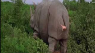 Ace ventura - rinoceronte