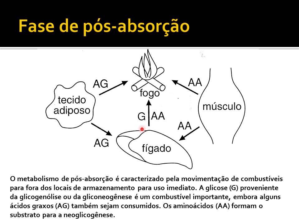 fases do metabolismo VA2 - YouTube
