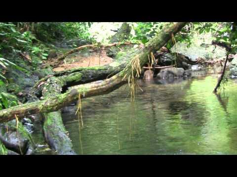 Kalimantan Pulau Borneo