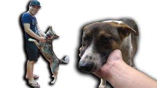 NTN - Thăm Lại Những Chú Chó Được Cứu Từ Lò Mổ
