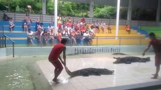 Смертельное шоу с крокодилами, Тайланд, о. Пхукет, крокодиловая ферма, мир крокодилов