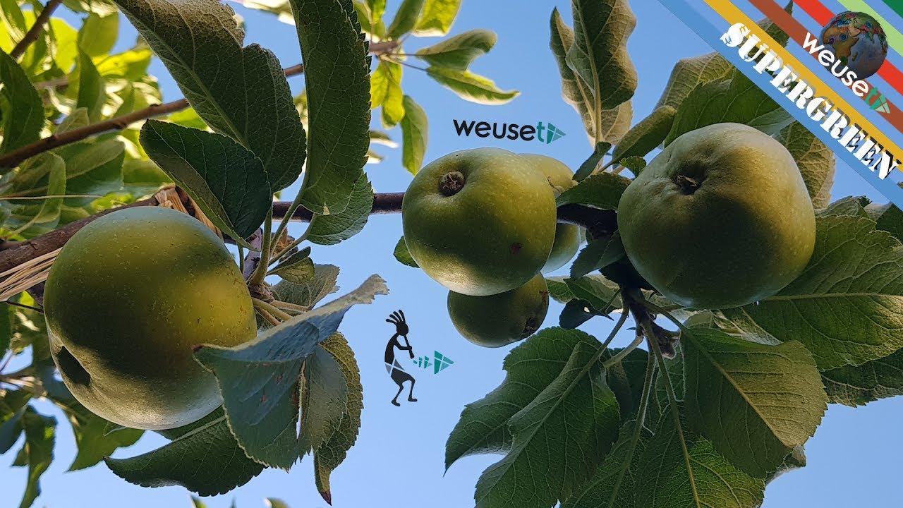 Innesti piante da frutto possibile innestare un melo su for Innesti piante