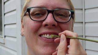 Twig Toothbrush