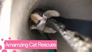 Amazing Cat Rescues | Real Life Heroes!