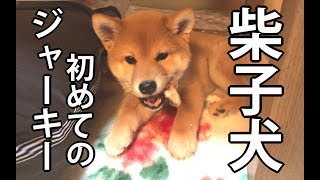 【柴犬どんぐり コロコロまんが日記】http://shibainudonguri.blog.jp/ ...