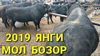 ЯНГИ  Мол Бозор Нархлари 15-2019