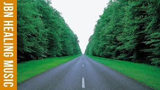 Nhạc thư giãn trị liệu - Nhạc không lời nhẹ nhàng yên bình với rừng cây xanh lá