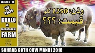 COW MANDI SOHRAB GOTH 2018 KARACHI | VIP TENTS | Episode – 17 | KHALQ & FAIR ORGANIC FARM