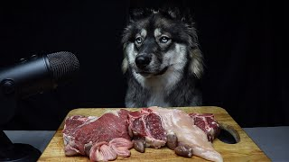 ASMR Dog Reviewing Raw Meats!