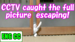 CCTV caught the full picture of cat escaping! 【Eng CC】
