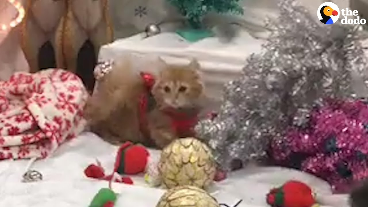 Kittens In Sweaters Play In Christmas Decorations - YouTube
